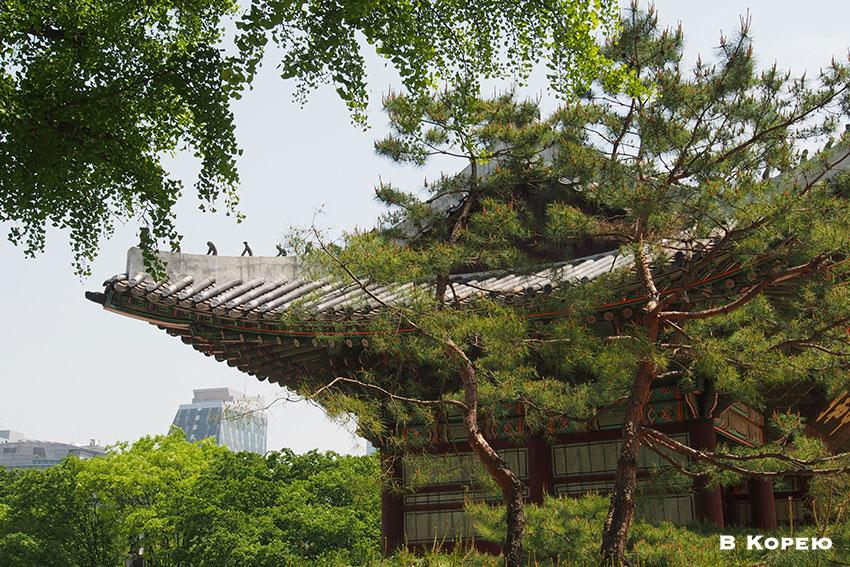 Корея-5
