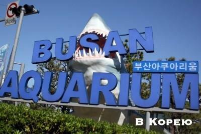 аквариум Пусана