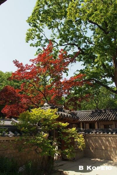Климат и погода в Корее