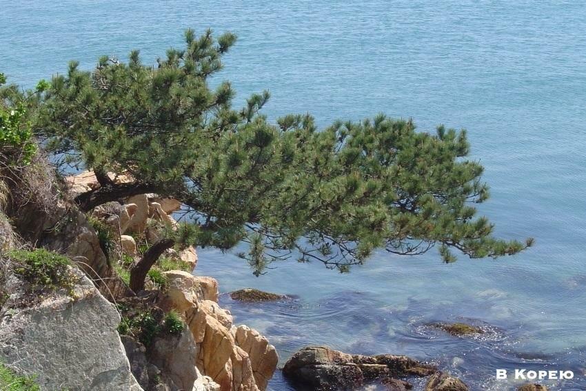 море и скалы